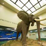 Bean Life Science Museum at Brigham Young Universi...