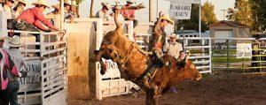 Rich County Fair 2020