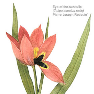 Free Botanical Art & Illustration Lecture