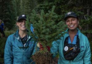 Alta Ski Area Tree Planting