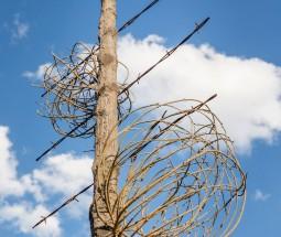 Flying Objects 5.0: Tumbleweeds