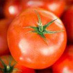 Tomato Propagation Workshop
