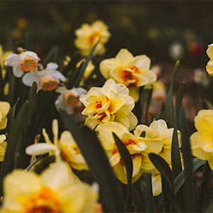 Landscaping With Bulbs Workshop -CANCELLED