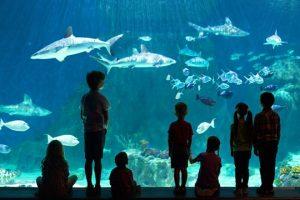 Aquarium Summer Camp (Ages 6-7): Ocean Explorer