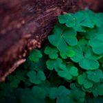 Irish Research Seminar: Commemorating St. Patrick's Day -VENUE CLOSED
