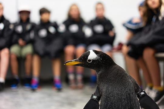 Aquarium Summer Camp (Ages 10-11): Animal Allies