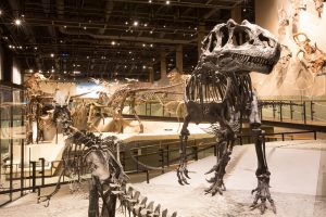 What physical features helped a dinosaur survive?