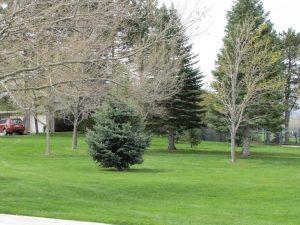 Donner Trail Park