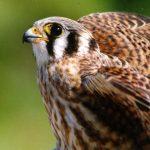 Backyard Bird Watching Webinar