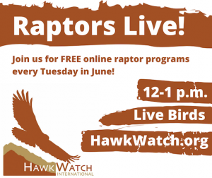 Raptors Live!