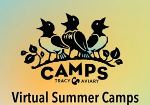 Bewitching Birds and Fantastical Flora Camp