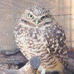 Tracy Aviary Preschool Class - OWLS