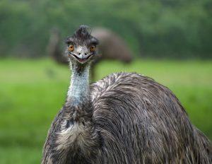 Tracy Aviary Preschool Class - EMUS
