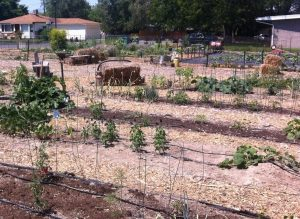 Historic Sandy Community Garden