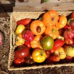 Live Webinar: What's Wrong with My Tomatoes?