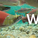 The Wild - Online