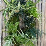 Designing with Air Plants- VIRTUAL