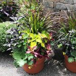 Containers for Fall Gardens- VIRTUAL