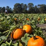 Cedar City Pumpkin Patch