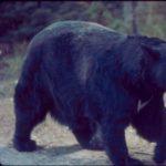 Wild Wednesdays: Animals and Plants Prepare for Winter- VIRTUAL