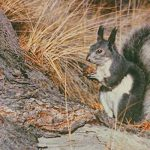 Virtual Wild Wednesdays: Nature's Hoarders