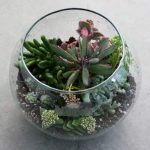 Succulent Terrarium Workshop- VIRTUAL