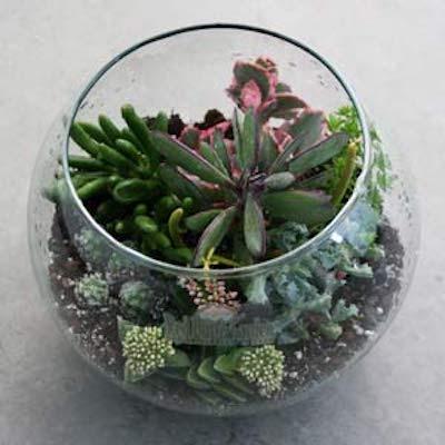 Succulent Terrarium Workshop- VIRTUAL