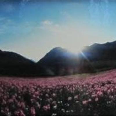 360 Albion Basin Wild Flowers