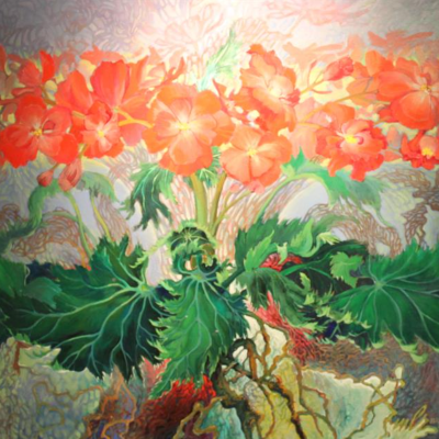 Begonia Fantasy