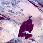 Red Cliffs Bird Fest at Greater Zion