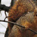 Squirrel Fest