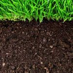 Understanding Soils for Gardeners- VIRTUAL