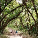 Arbor Day Celebration 2021