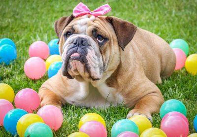 2021 Easter Dog Bone Scavenger Hunt