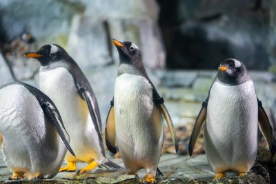 Penguin Awareness Week