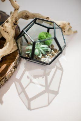 LUX Terrarium + Planter Class