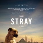 Stray (Virtual Cinema)