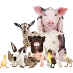 2021 Heber Valley Baby Animal Days