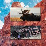 Family Science Night: Wildlife of Utah