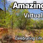 2021 Amazing Earthfest -VIRTUAL