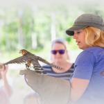 HawkWatch Live Bird Show & Hike