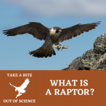 Take a Bite Out of Science: What Is a Raptor?