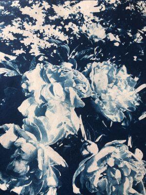 Cyanotypes - Sunshine Printmaking
