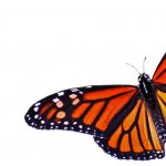Butterfly Day at the Museum