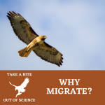 Take a Bite Out of Science: Why Migrate?