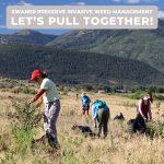Swaner Preserve Invasive Weed Management: Let's Pull Together!