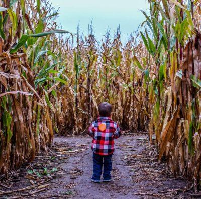 Corn Maze on the Farm 2021