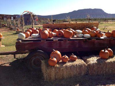 Staheli Farm Corn Maze and Pumpkin Patch 2021