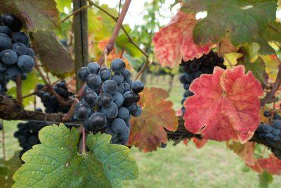 Tour of Italy Wine Tasting