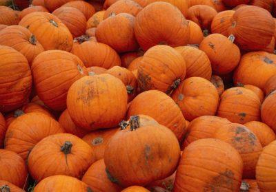 Hay Maze & Pumpkin Patch